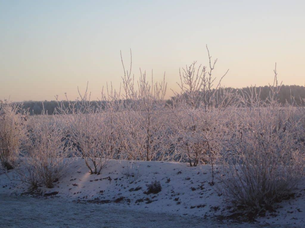 Winterliche Stille (Foto: Lena Noa) | Team Introvertiert